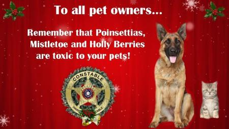 Keep Your Furry Family Members in Mind this Season!